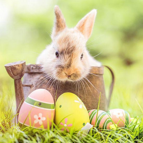 Urlaubsangebot Ostern im Hirschenwirt